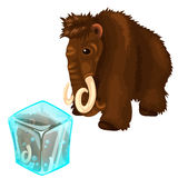 Shaggy mammoth and it copy frozen in ice cube Royalty Free Stock Photography