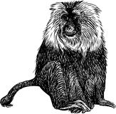 Shaggy monkey Royalty Free Stock Photo