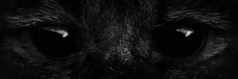 Shaggy monster black eyes closeup Royalty Free Stock Photos