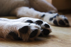 Shaggy paws of dog Stock Photo