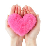 Shaggy pink heart on woman hands isolated on white royalty free stock images