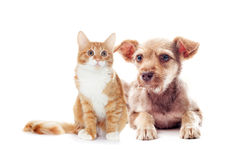Shaggy puppy and kitten Stock Photography