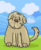 Shaggy terrier dog cartoon illustration Stock Images