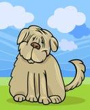 Shaggy terrier dog cartoon illustration Stock Images