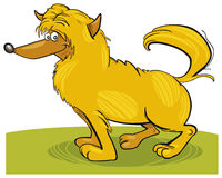 Shaggy yellow dog Stock Image
