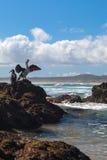 Shags βασιλιάδων της Νέας Ζηλανδίας σε έναν βράχο Στοκ Φωτογραφία
