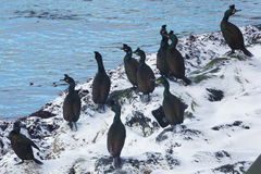 Free Shags In Norway Royalty Free Stock Images - 69064779