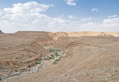 Shaharut dry stream in arava vally Judaean Desert, israel Royalty Free Stock Photo