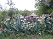 SHAKALAND, SUDAFRICA - CIRCA NOVEMBRE 2011: Case zulù tradizionali immagini stock libere da diritti
