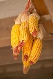 Shakes corn Stock Photography