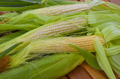 Shakes fresh young corn on the table Royalty Free Stock Images