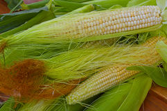 Shakes fresh young corn on the table Royalty Free Stock Photography
