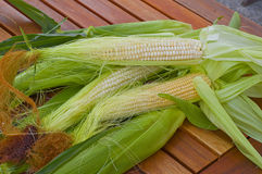 Shakes fresh young corn Stock Photography
