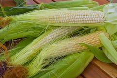 Shakes fresh young corn Stock Photos