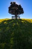 Shakespear Regionaal Park, het Gebied van Auckland, Nieuw Zeeland Stock Afbeelding