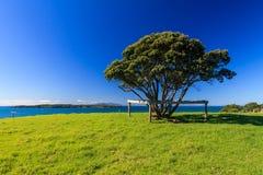 Shakespear Regionaal Park, Nieuw Zeeland Stock Afbeeldingen