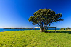 Shakespear regionalności park, Nowa Zelandia Obrazy Stock