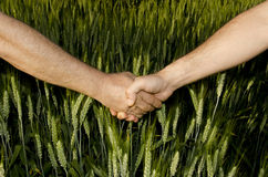 Shaking hands. In the field Royalty Free Stock Images