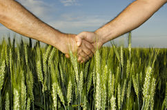 Shaking hands in the field. Shaking hands in the wheat field Stock Images