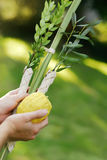 Shaking the Lulav Stock Image