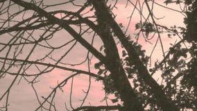 Shaking tree stock footage