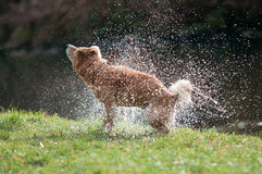 Shaking water Stock Photography