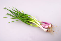 Shallot Fotos de Stock Royalty Free