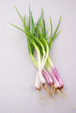 Shallot. In the white backgroud Royalty Free Stock Photography