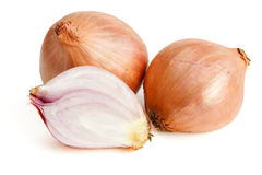 Shallot royalty free stock image