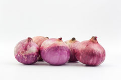 Shallot Stock Photography