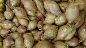 Shallot, Allium cepa aggregatum Royalty Free Stock Photography