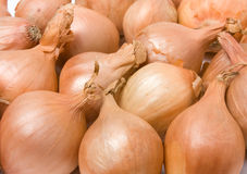 Shallot background Royalty Free Stock Images