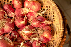 Shallot Stock Images