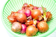 Shallot. In green basket on white background Stock Photo