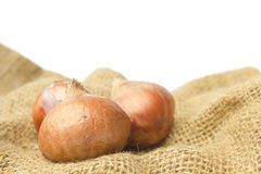 Shallot isolated on white background Royalty Free Stock Photography