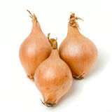 Shallot Line Up Royalty Free Stock Photography