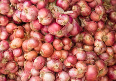 Shallot onion Stock Photos