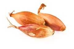 Shallot onion Stock Image