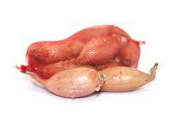 Shallot onion Royalty Free Stock Image