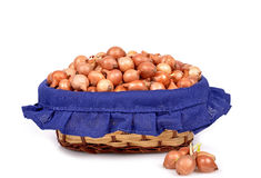 Shallot onions Stock Images