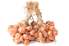 Shallot onions in a group Royalty Free Stock Photography