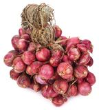 Shallot onions. In a group on white background stock photos