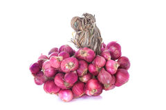 Shallot onions in a group on white background Royalty Free Stock Images