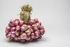 Shallot onions in a group. Royalty Free Stock Photos