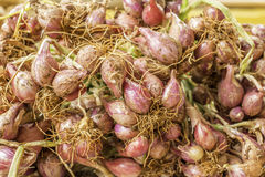 Shallot onions Royalty Free Stock Image