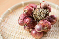 Shallot onions Royalty Free Stock Photo