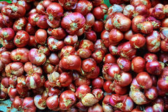 Shallot. S grow in bulbs composed of multiple cloves. Their color ranges from coppery brown to purplish rose Royalty Free Stock Photos