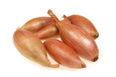 Shallot vegetables. Shallot or scallion or griselle - vegetables similar to onion royalty free stock images