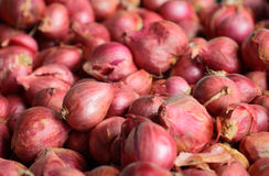 Shallots Stock Photos