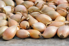 Shallots drying after harvest Royalty Free Stock Image